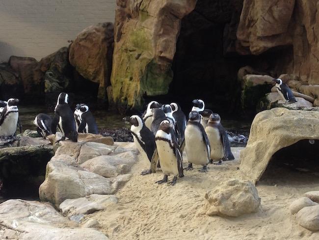 akvaryum_penguen