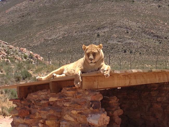 safari6