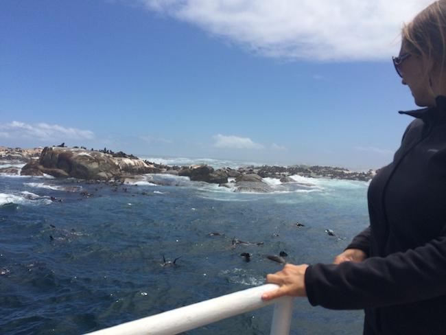 seal_island_1