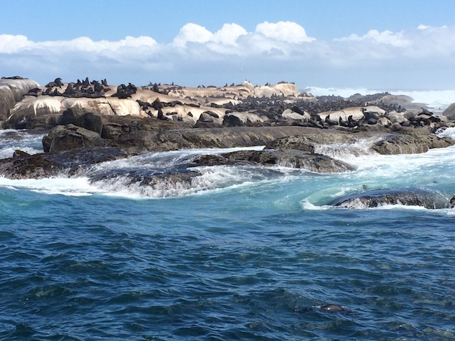 seal_island_2